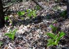 Blooming Plants in Habitat