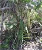 Plant in Group's Habitat