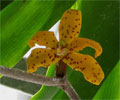 Basal Flower
