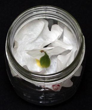 Paper in Jar