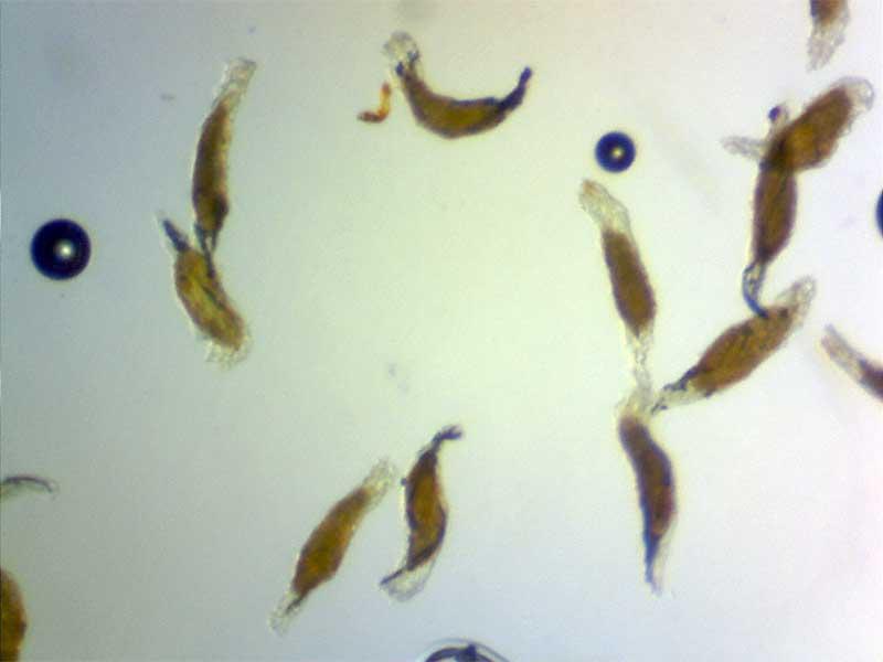 Seed Photo